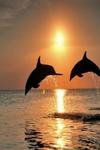 Dolphin wallpapers hd android apps on google play dolphin wallpapers hd screenshot thumbnail voltagebd Gallery