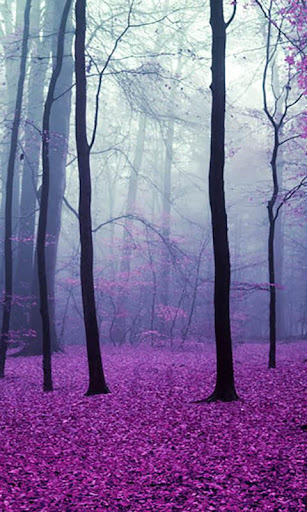 Magical Forest Live Wallpaper