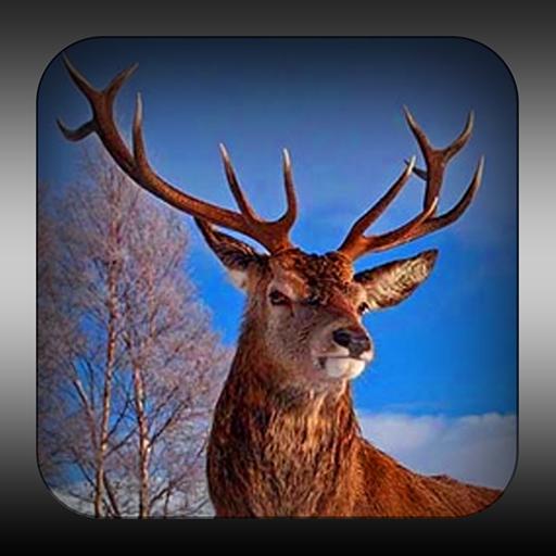 野生猎人 冒險 App LOGO-APP試玩