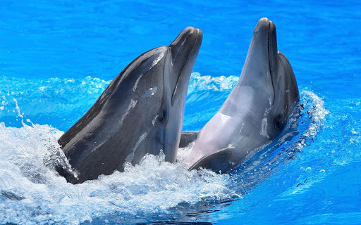玩免費個人化APP|下載海豚壁紙 app不用錢|硬是要APP
