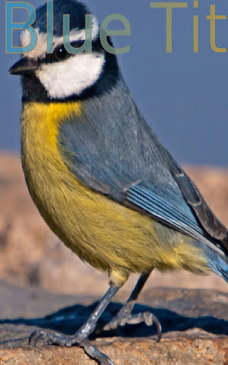 Nice Birds 1 FREE