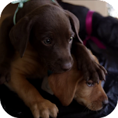 Cute Puppy Video LWP