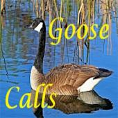 Goose Calls