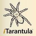 iTarantula - Tarantulas Guide icon