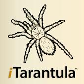 iTarantula - Tarantulas Guide