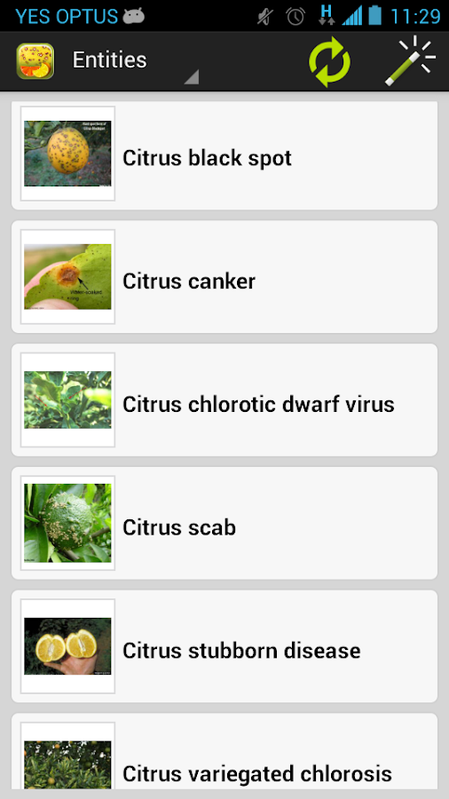 Citrus Diseases Key- screenshot