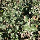 Unknown Plant Species