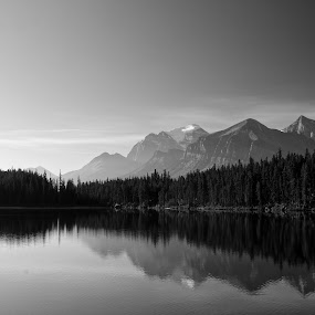 Herbert Lake by Eva Lechner - Black & White Landscapes ( canada, herbert lake, reflections, icefields parkway, black and white, b&w, landscape,  )