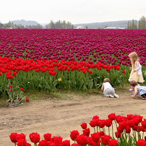 Exploring the Tulip Fields by Jennifer Wheatley-Wolf - Flowers Flowers in the Wild ( field, girls, jennifer wheatley-wolf, children, tulips, flowers, seattle washington, colorful, mood factory, vibrant, happiness, January, moods, emotions, inspiration,  )