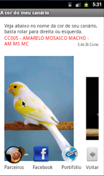 The color of my canary