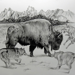 Encounter the Mountain by Alicia McNally - Drawing All Drawing ( buffalo, bison, wolf, wildlife, hunt, wolves, north american wildlife, pencil drawing )