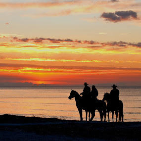 Sunset Ride by Daniela Snyder - Animals Horses