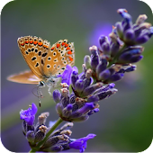 Lavender 3D Live Wallpaper