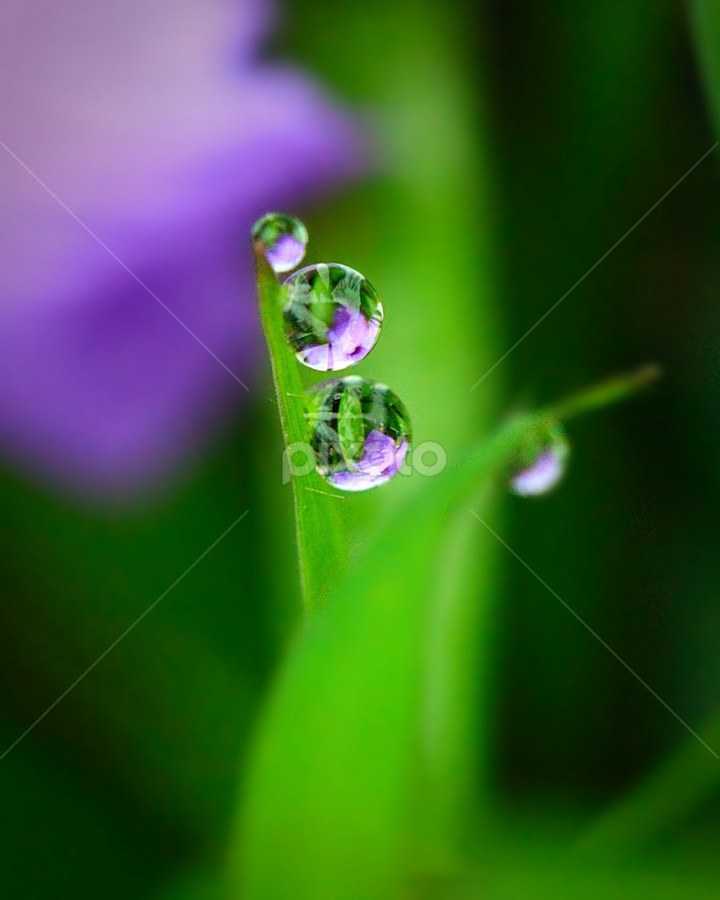 by Fentee  Affandy - Nature Up Close Natural Waterdrops ( grass, waterdrops, droplets )