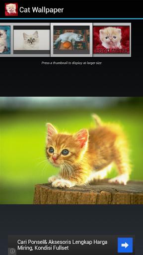玩媒體與影片App|Cat Wallpapers免費|APP試玩