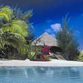 Caribbean Beach Live Wallpaper