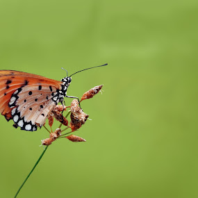 Butterfly by Abdul Aziz - Instagram & Mobile Android (  )