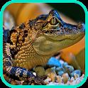 crocodile Wallpaper icon