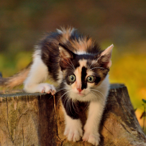 Chasing the sun by Ion Alexandra - Animals - Cats Kittens (  )