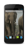 Screenshot of Elephant Free Video Wallpaper