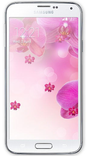 Pink Orchid Live Wallpaper HD