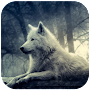 3D Wolf Wallpaper APK icon