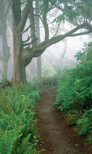朴子拼圖森林高清