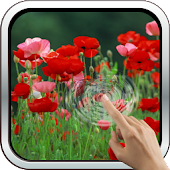 Galaxy Interactive Red Poppies