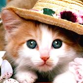 Kitty Cat Sound