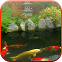 Koi Pond Video Live Wallpaper icon