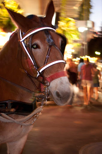 mule-in-French-Quarter-New-Orleans - Mule in the French Quarter, New Orleans.