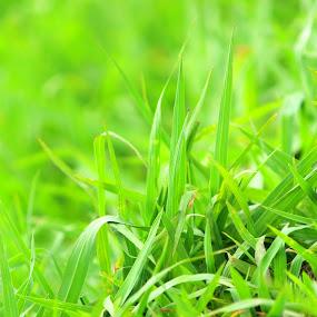 by Wibi Prayogo - Nature Up Close Leaves & Grasses