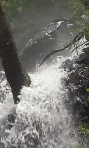 Stormy forest waterfall
