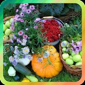 Дача и огород