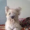 Dog, Lasa