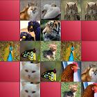 Animals Matching Game icon