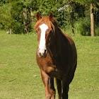 Pony Lessons icon