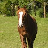 Pony Lessons