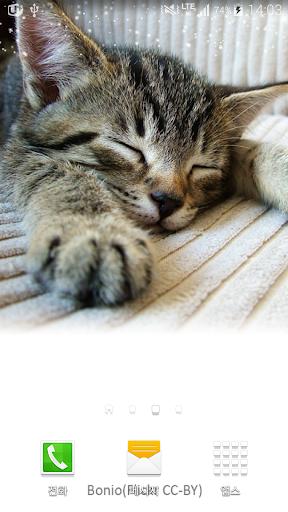 잠에취한아기고양이배경