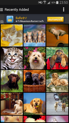 Cats Dogs Set Wallpapers