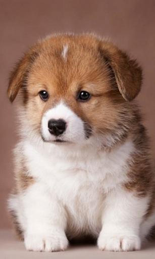 可愛的小狗