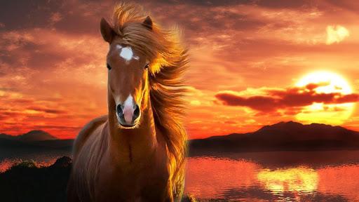 無料个人化Appの馬の壁紙|記事Game