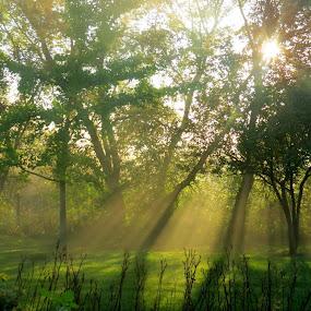 Sunrise in my backyard by Beth Bowman - Landscapes Sunsets & Sunrises (  )