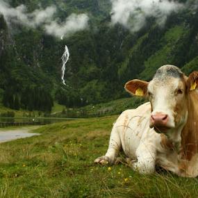 by Irena Brozova - Animals Other Mammals ( austria )