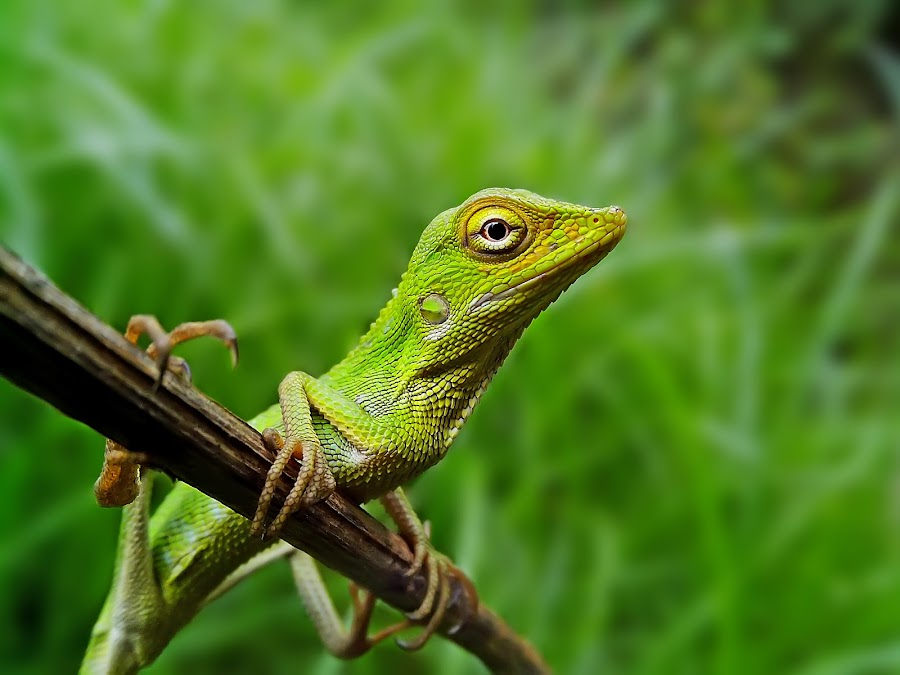 rest by Hendrata Yoga Surya - Instagram & Mobile Android ( reptiles, bunglon, lizard, cross a26 )