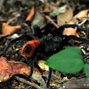 Mexican black velvet