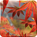 Autumn Tree Live Wallpaper icon