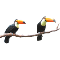 Toucan Stickers icon