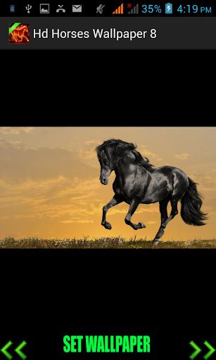 Hd Horses Wallpaper