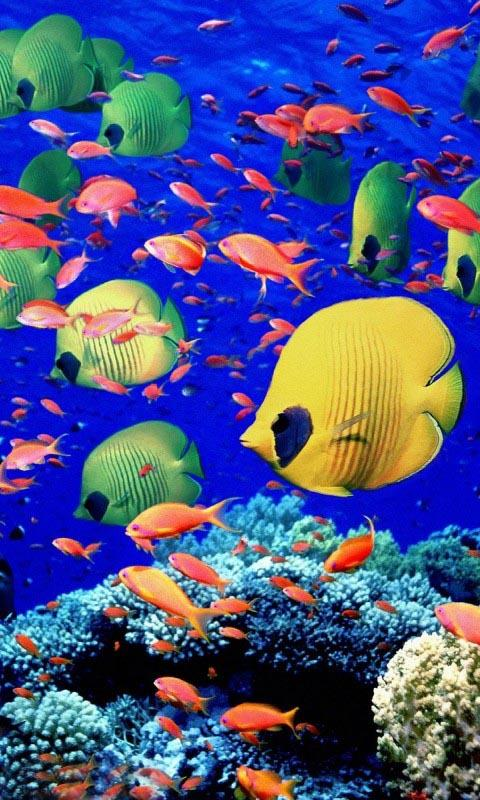 Aquarium live wallpapers android apps on google play for Live fish wallpaper